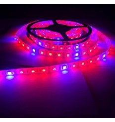 LED augalų juosta 14,4W - IP65 - 5050 - 60 SMD/m